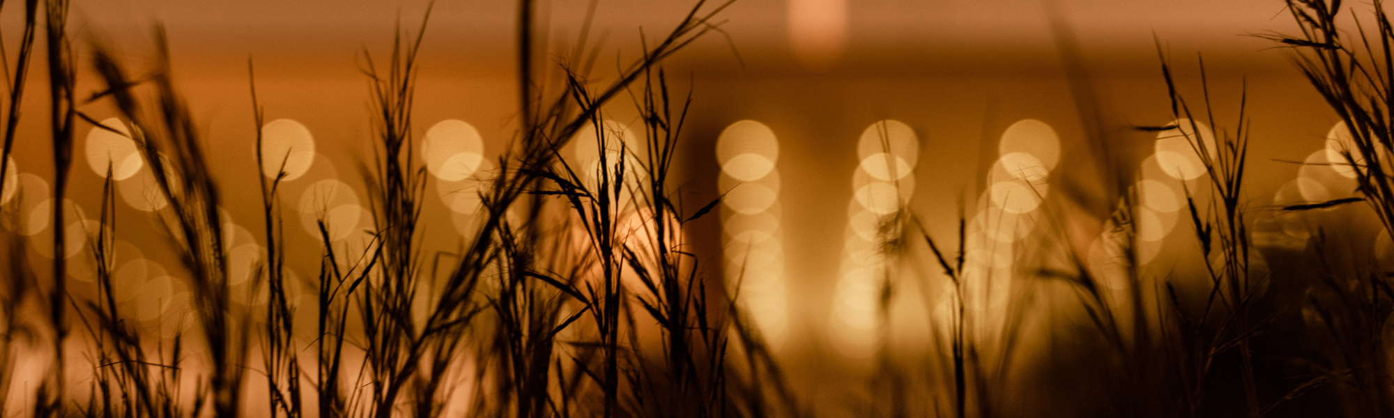 Grass at night with gold lights behind. Photo by Manos Gkikas on Unsplash
