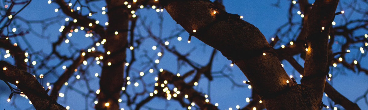 Lights in a tree. Photo by Fred Heap on Unsplash