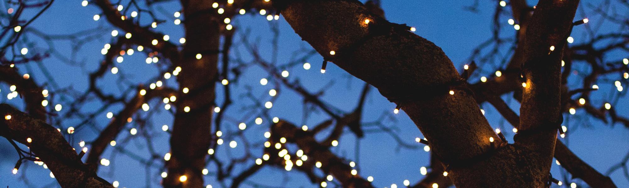 Lights in a tree. Photo byFred HeaponUnsplash