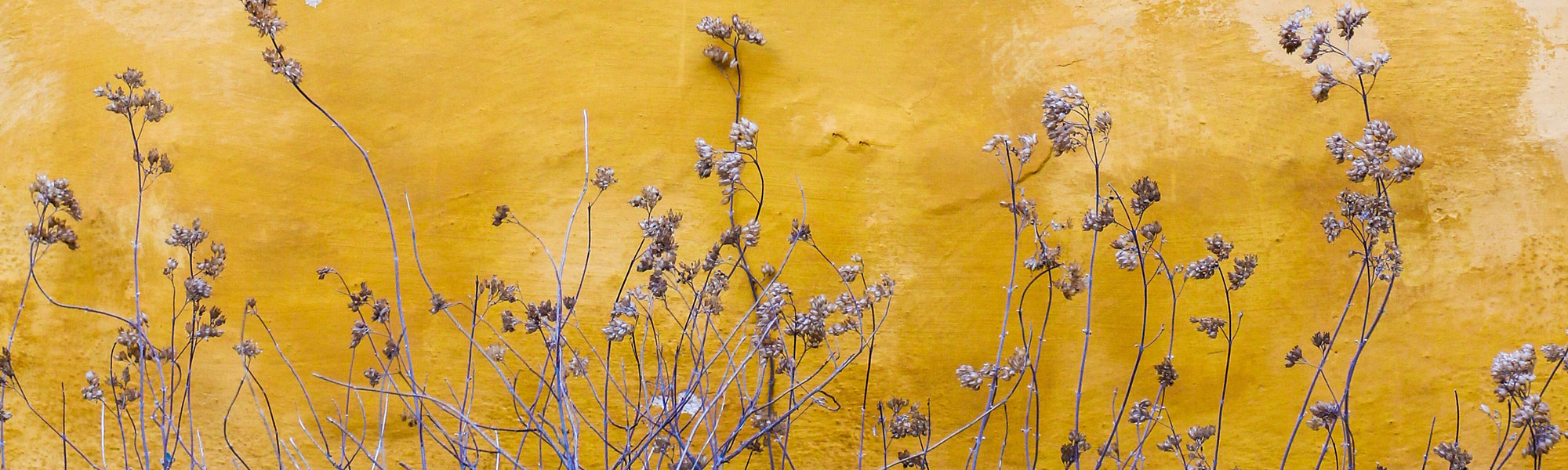 Yellow wall with plants, Photo by Mona Eendra on Unsplash